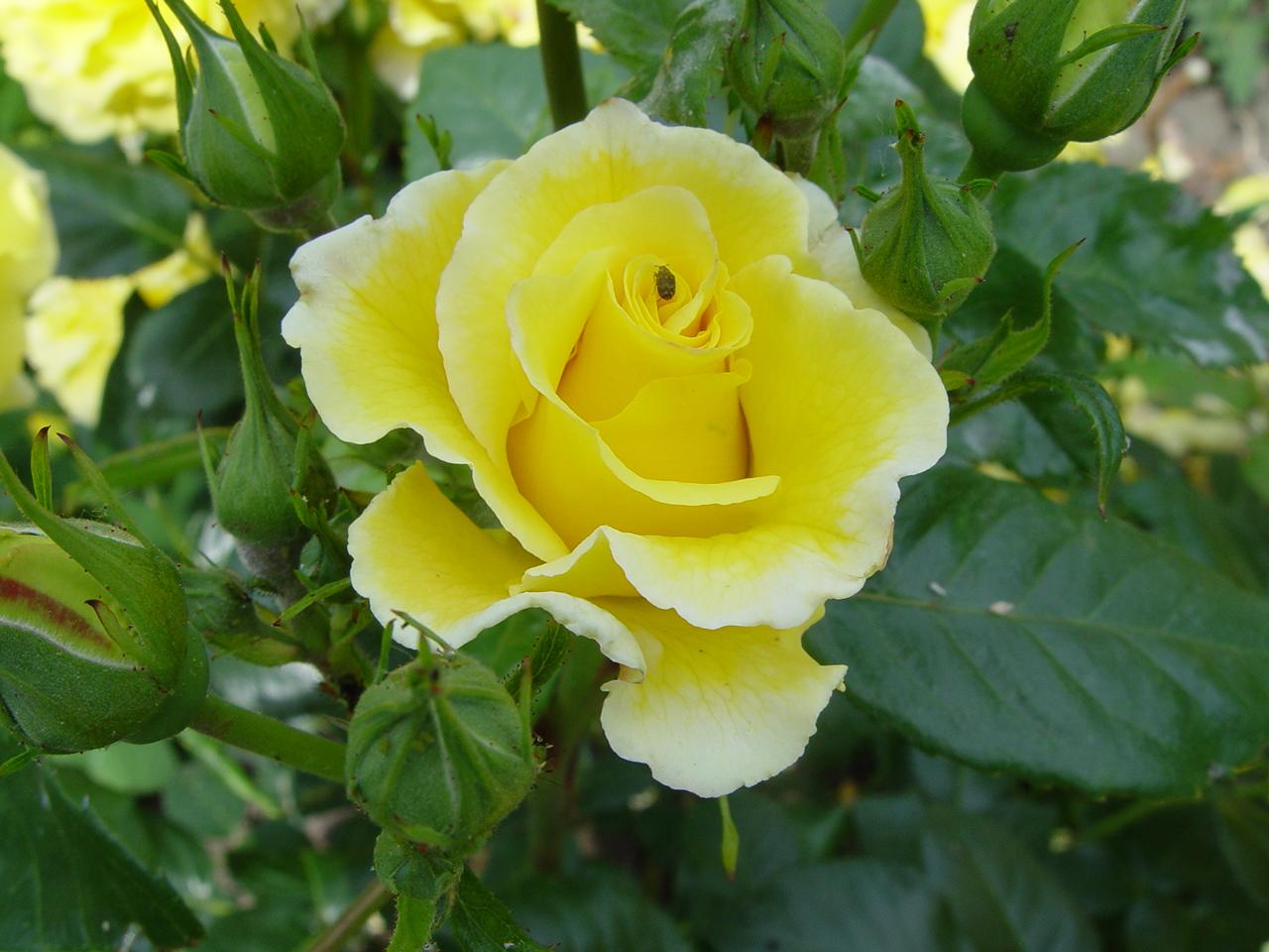 Mdchenzimmer Rosa Gelb
